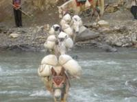 we have been leading Dolpo trek since 7 year visit our home page www.everestlsndtrek.com for more info